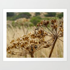 Navaro Bluffs, fall flowers Art Print
