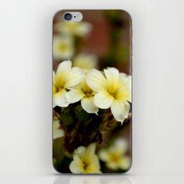 Sisyrinchium striatum (Aunt May) pale yellow flower iPhone Skin