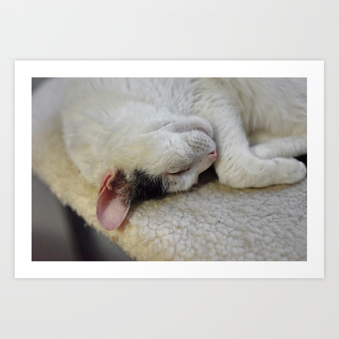 Cute Kitty Snoozes Softly Art Print