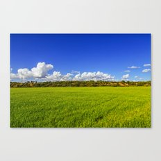 Rice Field II Canvas Print