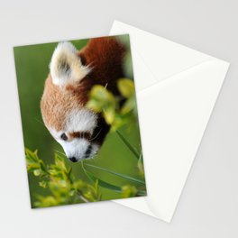 Red Panda 1 Stationery Cards