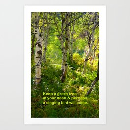 Aspens and Chinese Proverb Art Print