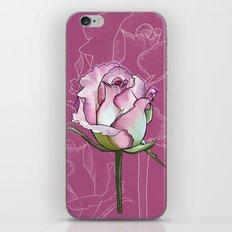 Pink rose - botanical flower illustration iPhone & iPod Skin