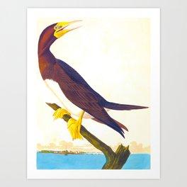 Booby Gannet Bird Art Print