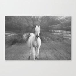 Horse Cantering Canvas Print