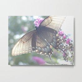Sheer Butterfly Metal Print