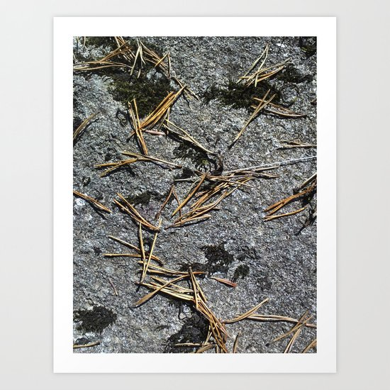 fir needle on a rock Texture Art Print