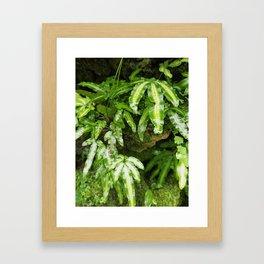 The Fernery Framed Art Print