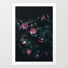 Flowers-Camelias Art Print