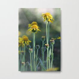 Alpine Wildflowers Metal Print