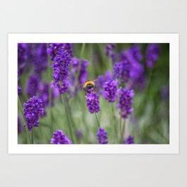 Bumblebee Fields Art Print