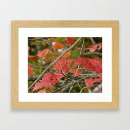 Dimming Framed Art Print