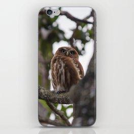 Birds from Pantanal Caburé iPhone Skin