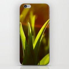 rays iPhone & iPod Skin