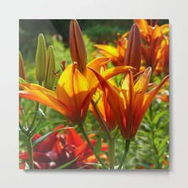 Iris Flowers - For a beautiful day Metal Print
