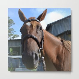Funny Horse Metal Print