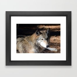 The Eyes of a Wolf Framed Art Print