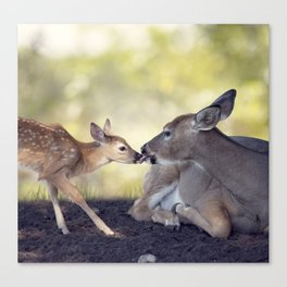 White-tailed female deer with  her  little baby Canvas Print