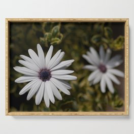 Shasta Daisy Pair Serving Tray