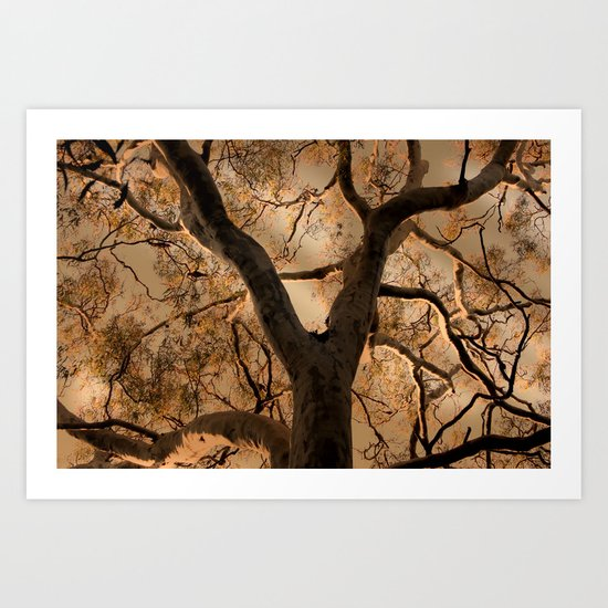 Big Tree, Late Afternoon Art Print