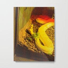 Yellow snake. Metal Print