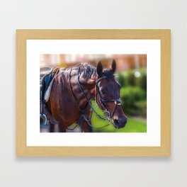 Horse Wall Art, Horse Portrait. Horse looking straight forward closeup. Framed Art Print