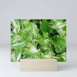 Green and white swirl with hosta plant Mini Art Print