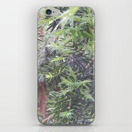 Yew Tree iPhone Skin