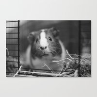 guinea pig Canvas Prints featuring guinea pig by ihavenonameandadress