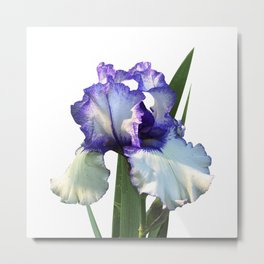 Iris 'Freedom Song' on white Metal Print
