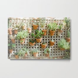 Wall of Succulent Plants Metal Print