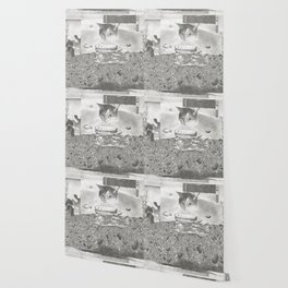 Catfishing Wallpaper