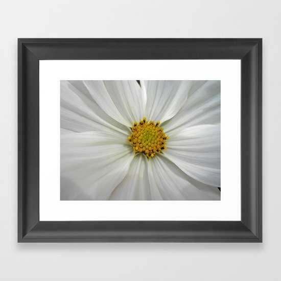 white cosmos III Framed Art Print