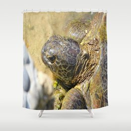 Captive Turtle Shower Curtain