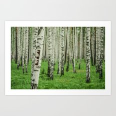 Forrest of white trees Art Print