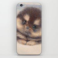 pomeranian iPhone & iPod Skins featuring Pomeranian by irshi