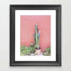 costa rica cacti Framed Art Print