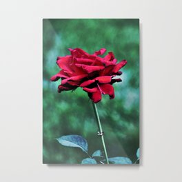 Withered Beauty (ROSE) Metal Print