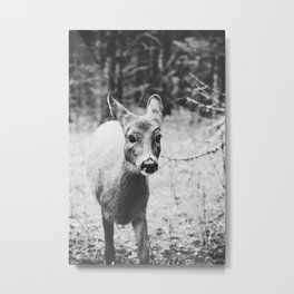 deer. Metal Print