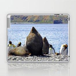 Fur Seal Resting Laptop & iPad Skin