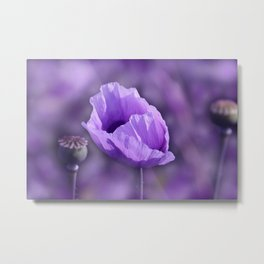 the beauty of a summerday -7- Metal Print
