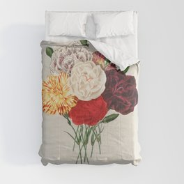 Carnation (Dianthus caryophyllus) illustrated by Charles Dessalines D Orbigny (1806-1876) Comforters