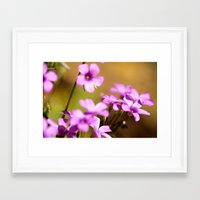 flora Framed Art Prints featuring Flora  by MVision Photography