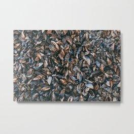 Mussels Metal Print