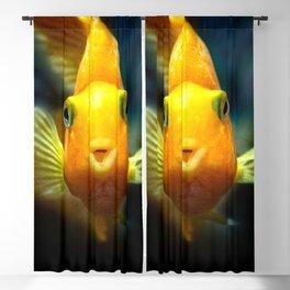 Funny goldgish Blackout Curtain