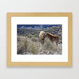 Salt River Mare and Her Colt, No. 1 Framed Art Print