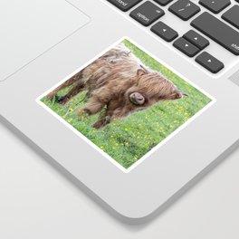 Baby highland cow Sticker