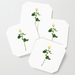 Yellow Rose (Color) Coaster