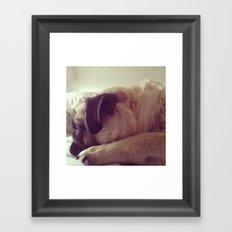 sleepy pug Framed Art Print