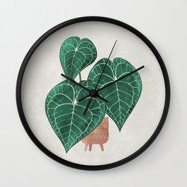 Anthurium clarinervium (potted) Wall Clock